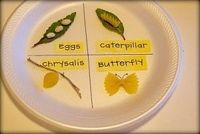 Pasta -Butterfly Life Cycle