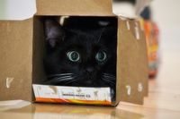 Some cats are into boxes... literally.
