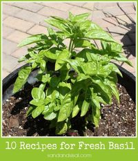 10 Recipes for Fresh Basil