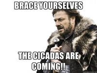 Brace yourself - brace yourselves The cicadas are coming!!
