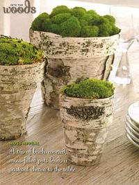 Birch and Moss Pots