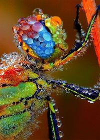 Dragonfly covered in dew.