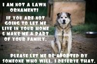 Animals should be family-not stuck in a yard on a chain and forgotten.