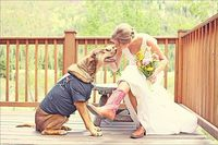 Melissa's dog was in her outdoor wedding. There are more pictures and info about her wedding on the site...including she paid only $175 for the dress at a consignment store. Original tag of $ 950 was still on it!