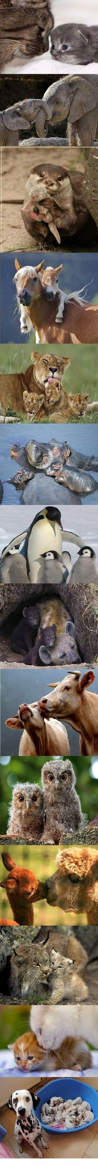 Animal mommys