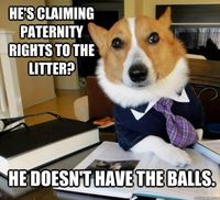 he's claiming paternity rights to the litter?