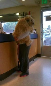 Afraid of the vet --> this is my dog haha