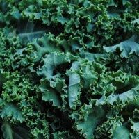 Kale: why you should eat it, how to grow it and how to cook it