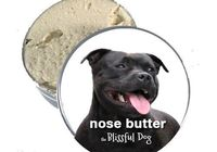 American Staffordshire Pit Bull Terrier Nose by TheBlissfulDog, $11.50
