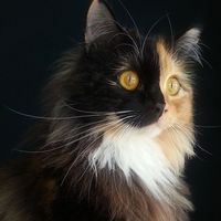 A beauty from catsofinstagram