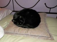 My Cat Sleeps in My Bed -- and Causes Chaos (Catster article)
