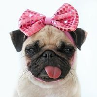 pug puppies pictures funny | Funny Pictures Funny Animals Funny Baby Funny Quotes Funny Wallpapers