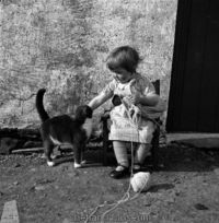 wee knitter