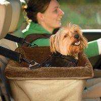 "The best part of a puppy's car ride is the view�€""help him out with the Skybox Booster Seat. With a washable padded liner and metal supports for structural integrity, this item from Kurgo makes a small dog's car ride that much ..."