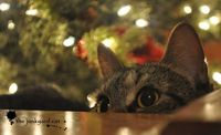 Matilda waits for Santa (Confessions of a Junkyard Cat)