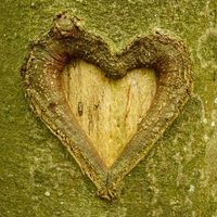 carved in to the tree trunk long time ago...Love's legacy