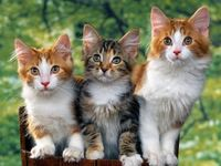 Triplets - Cat, Catty & Kitty!