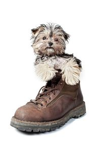�œ� Puppy In A Boot