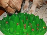 """""""Green"""" is a new pet product that turns your dog's meal into a game and stops them from gobbling their food. - My dogs would have a heart attack...LOL"""