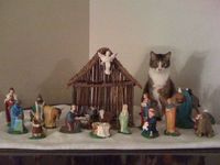 Three Wise Men and a Cat