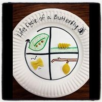 Butterfly life cycle with pasta!