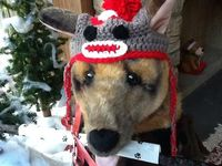 Sock monkey hat for dogs